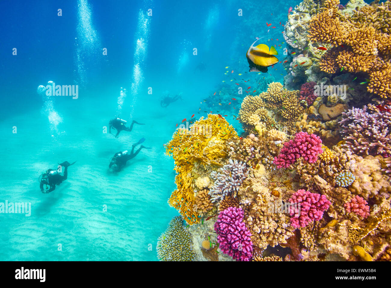 Unterwasser-Blick auf Taucher und Riff, Marsa Alam, Rotes Meer, Ägypten Stockbild