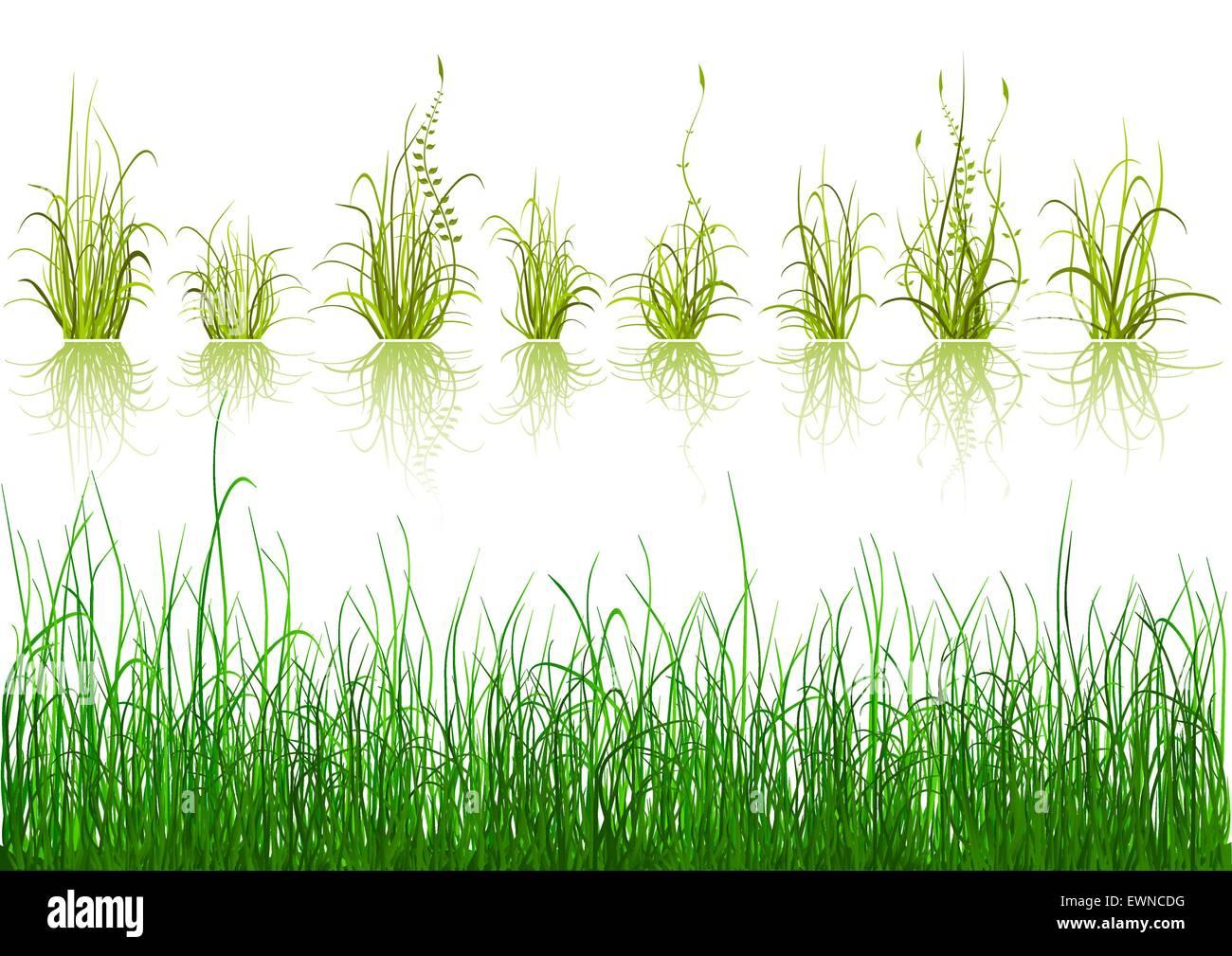 Grass Vector Vectors Stockfotos & Grass Vector Vectors Bilder - Alamy