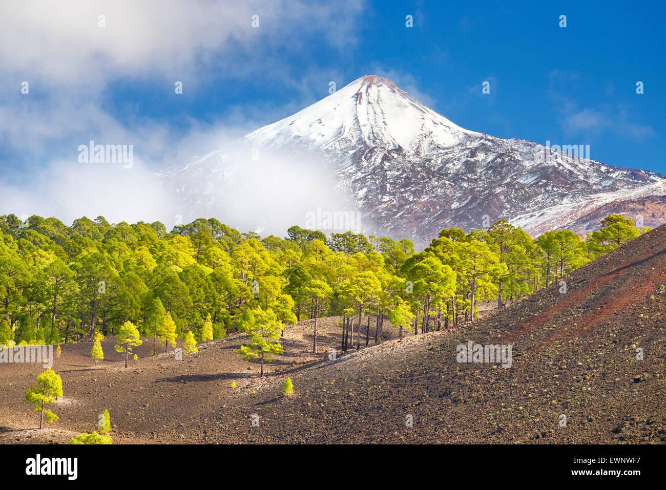 Nationalpark Teide, Teneriffa, Kanarische Inseln, Spanien Stockbild