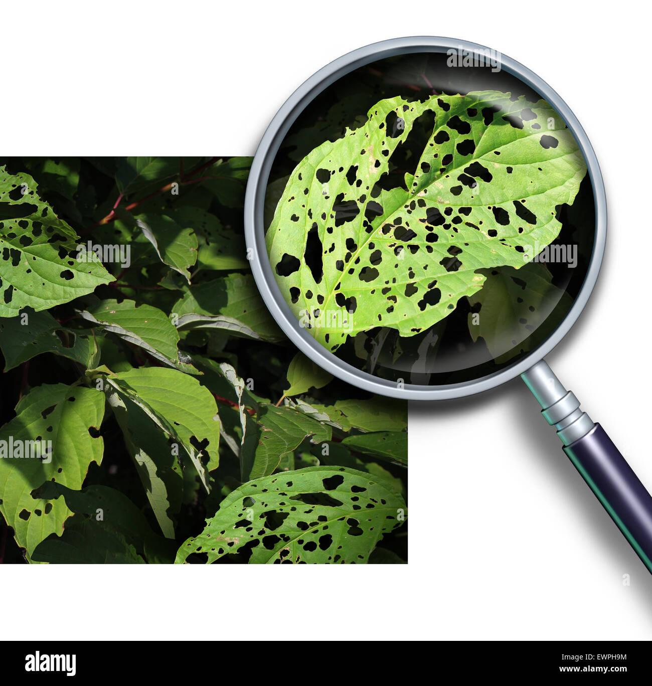 Anlagenkonzept krankheit als eine gruppe von besch digte bl tter mit l chern verursacht durch - Zimmerpflanzen schadlinge bilder ...