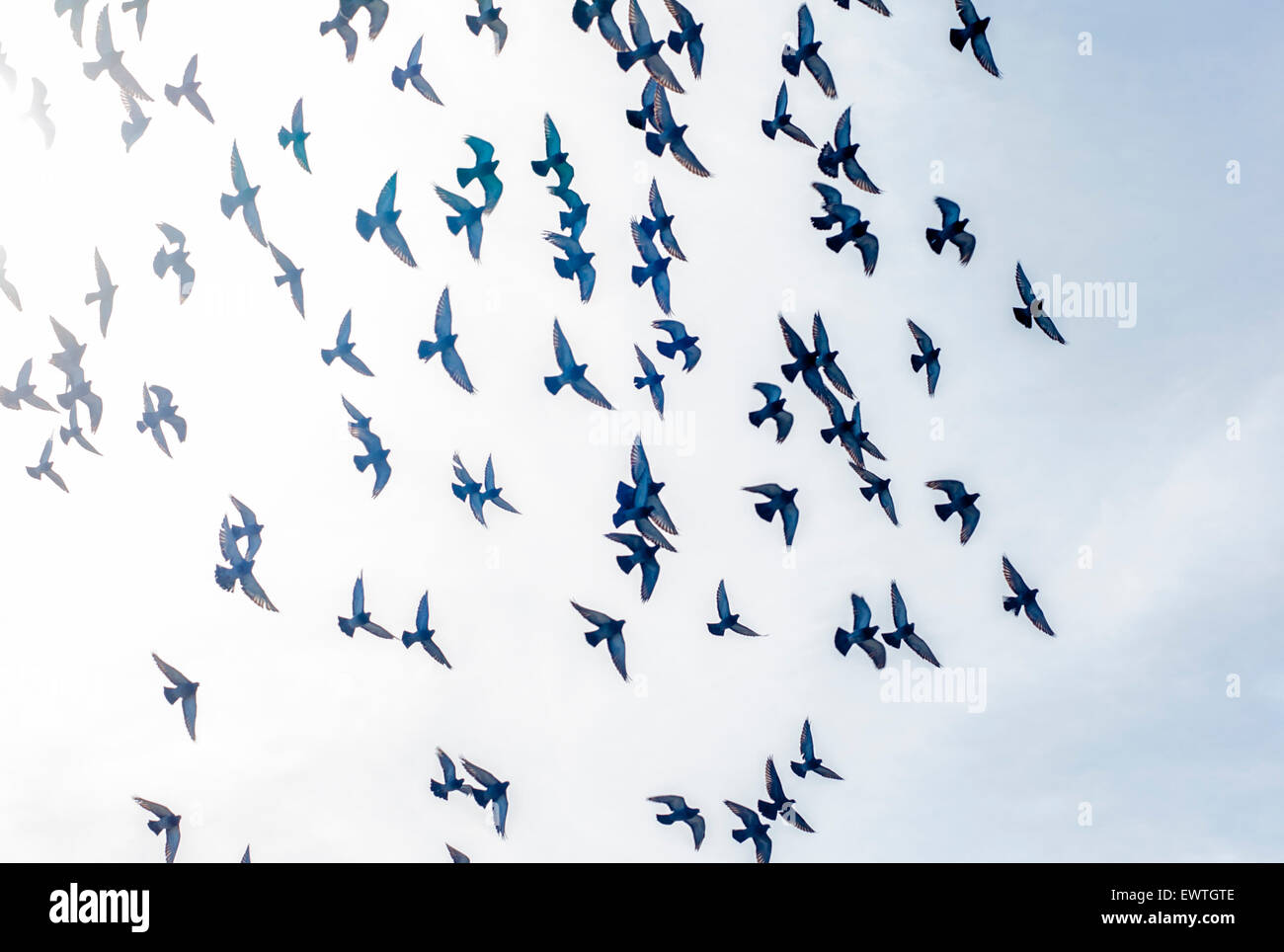 Vögel fliegen in der Sonne in La Jolla, Kalifornien Stockbild