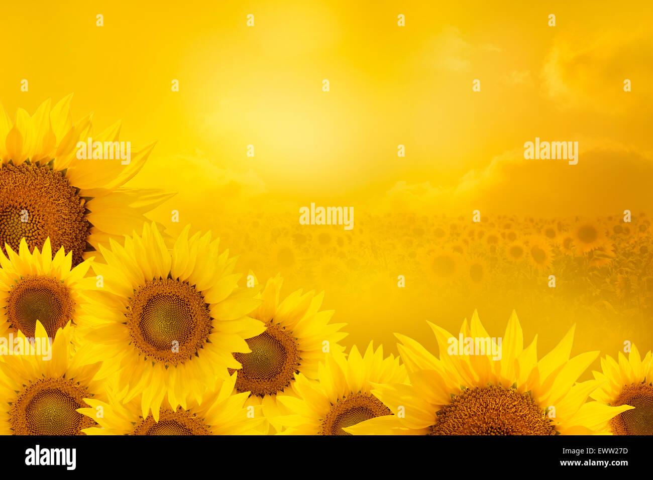 Flower Border Clip Art Stockfotos & Flower Border Clip Art Bilder ...