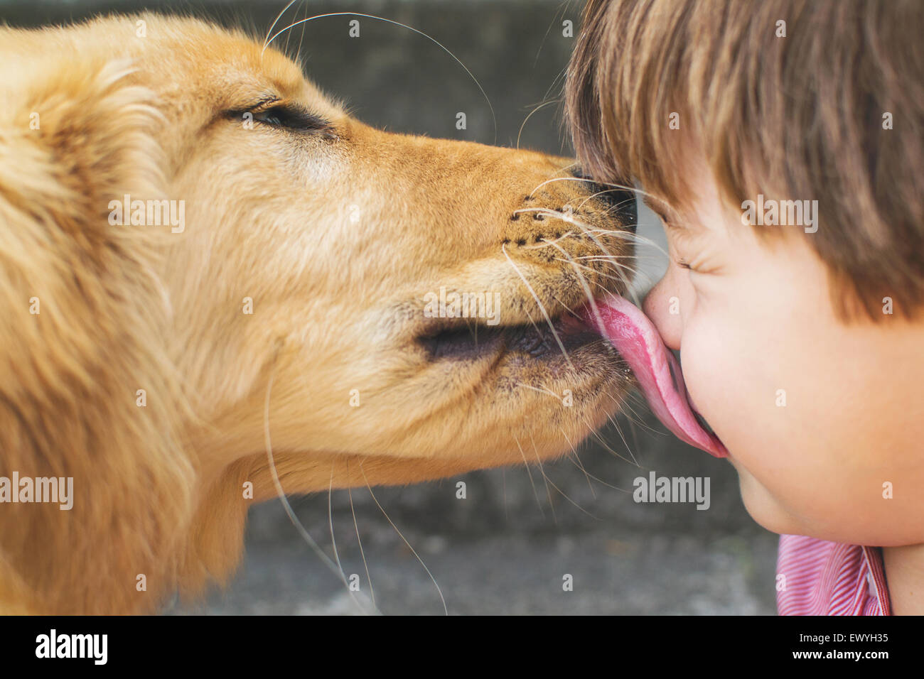 Hund leckt einem jungen Gesicht Stockbild