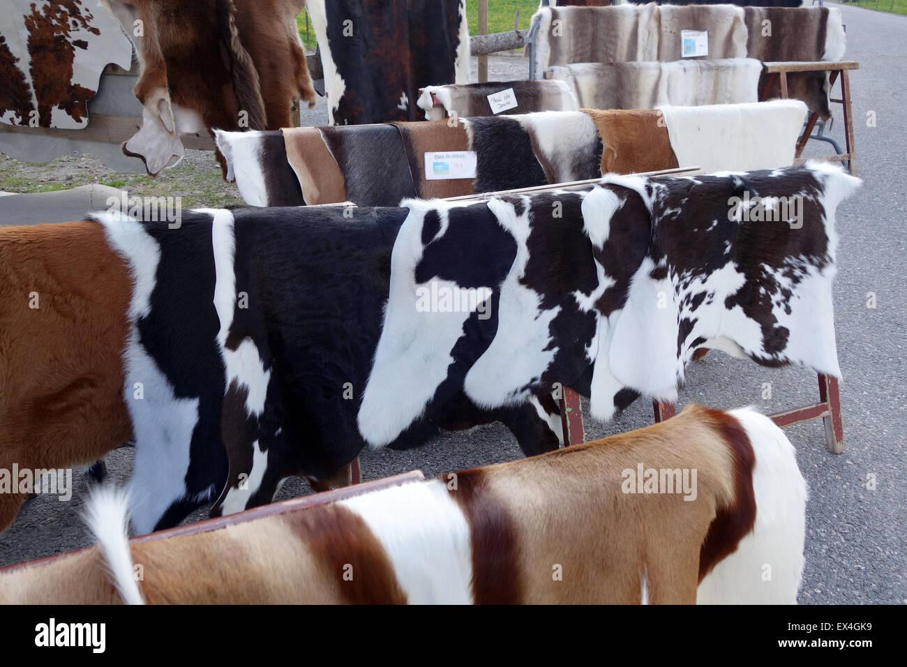 Kuh & Ziege Rinder Tier Rindsleder versteckt für Verkauf Souvenir Shop Col des Aravis Rhone-Alpes Frankreich Stockbild