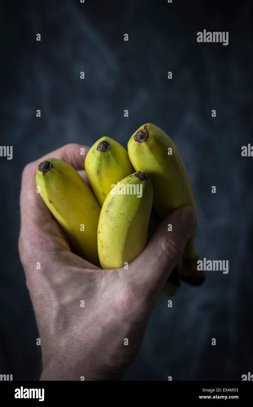 Hand, die Mini-Bananen vor dunklem Hintergrund Stockbild