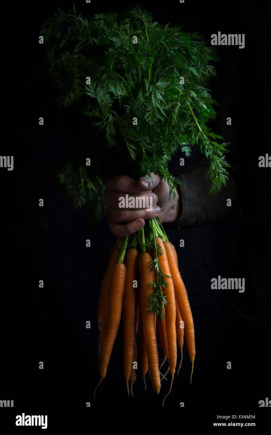 Bündel von Karotten in der hand Stockbild