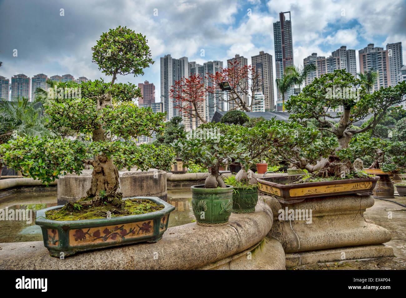 bonsai exhibition stockfotos bonsai exhibition bilder alamy. Black Bedroom Furniture Sets. Home Design Ideas