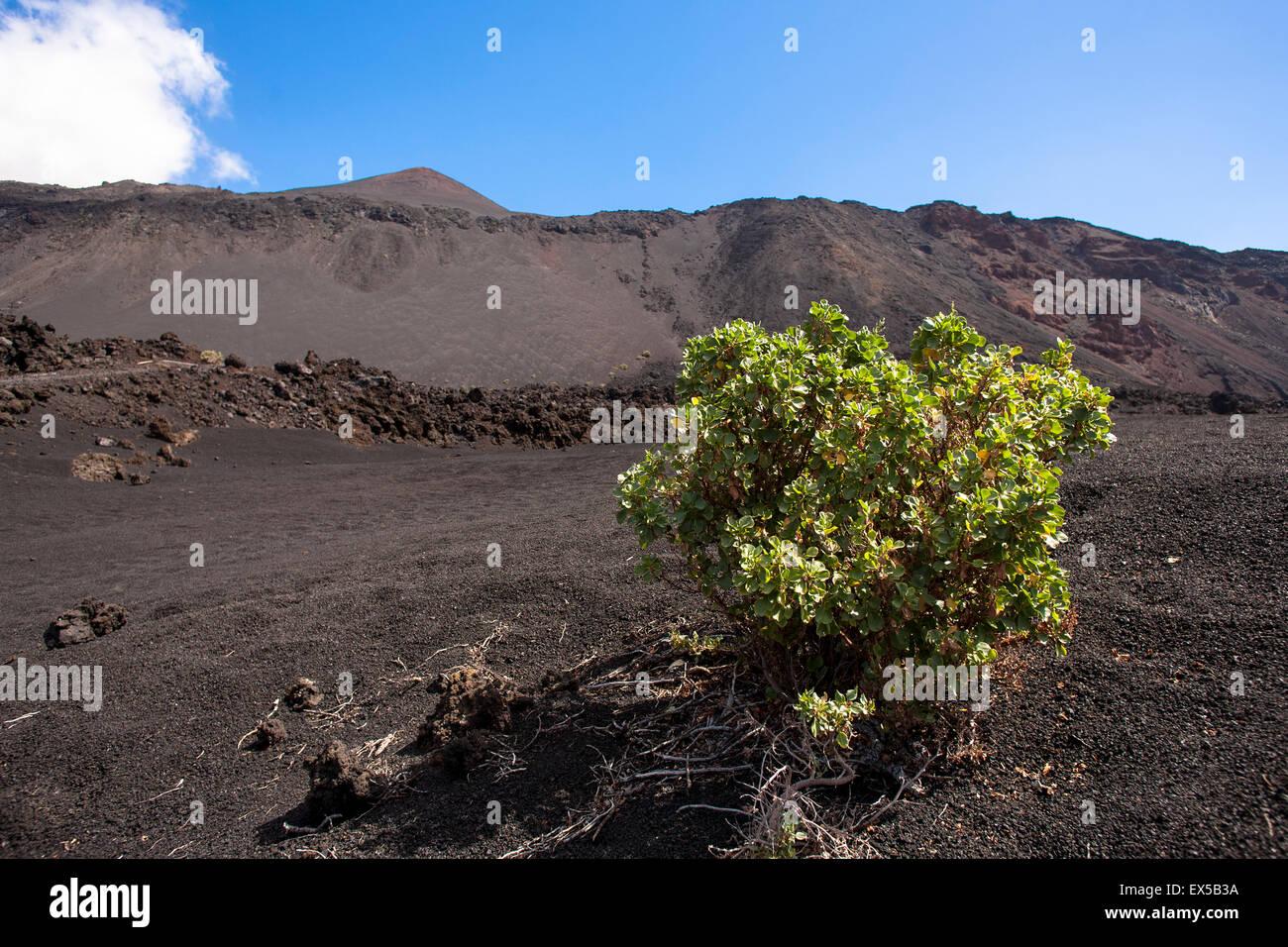 ESP, Spanien, die Kanaren Insel La Palma, Bereich der Lava des Vulkans San Antonio in der Nähe von Fuencaliente. Stockbild
