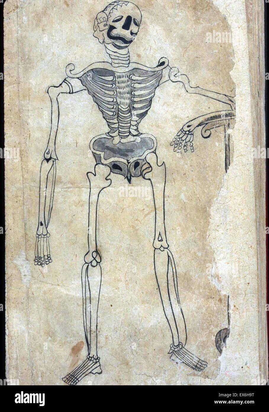 Tolle Von Anatomie Gemacht Zeitgenössisch - Anatomie Ideen - finotti ...