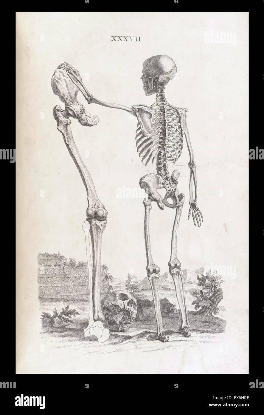 Nett Anatomie Einer Krähe Ideen - Anatomie Von Menschlichen ...