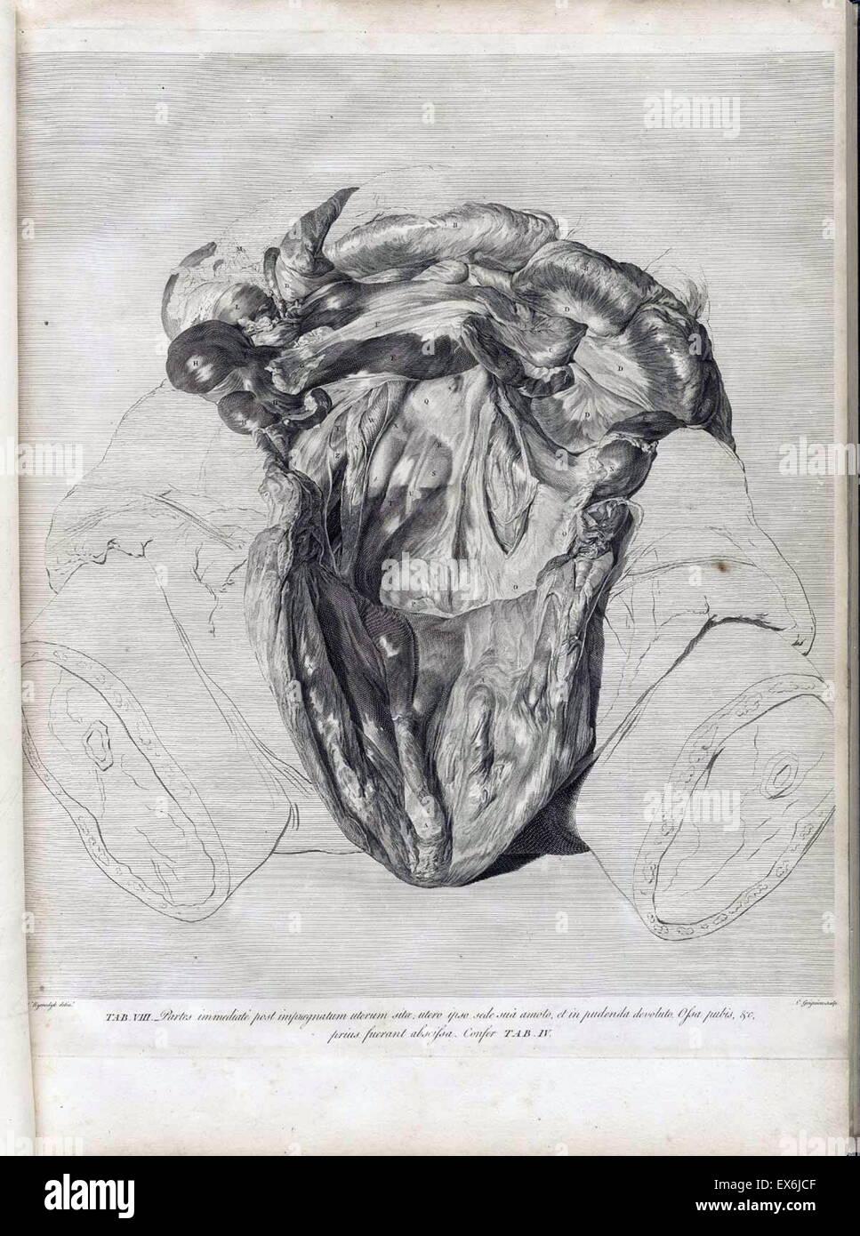 anatomische Illustrationen aus \