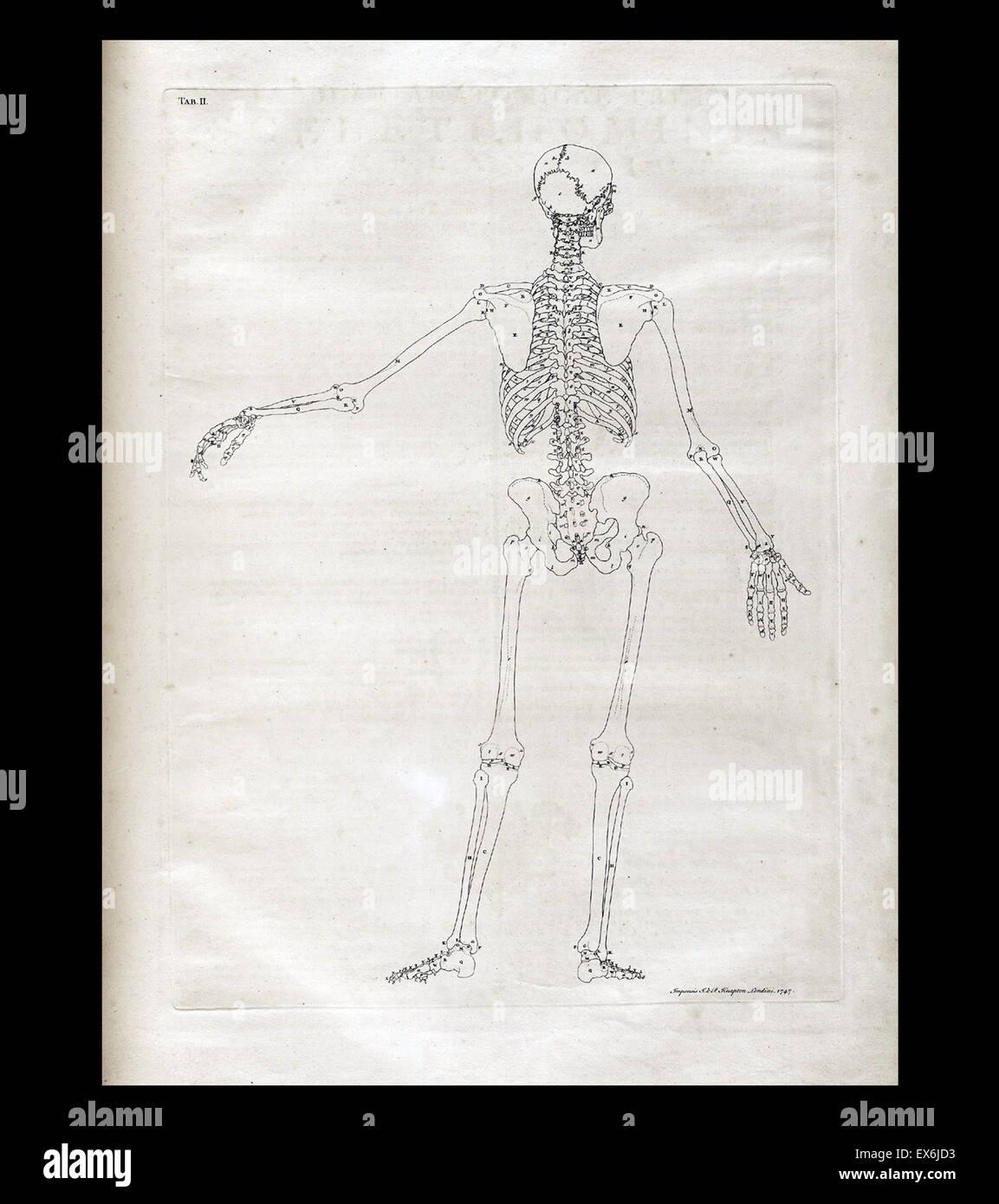 anatomische Zeichnungen von Bernhard Siegfried Albinus \