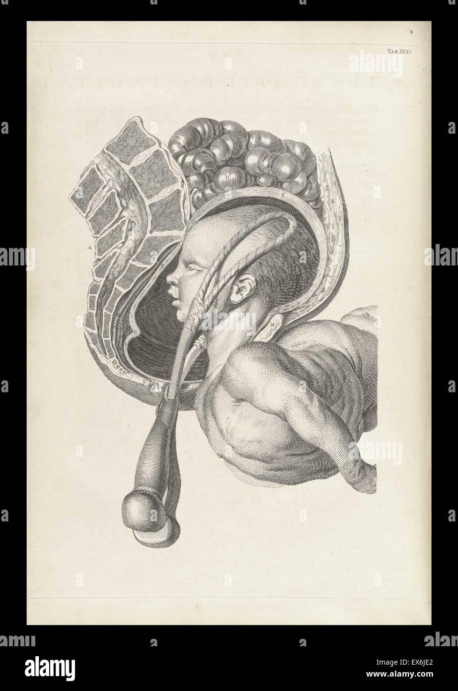 """Illustration aus """"Ein Sett anatomische Tabellen mit Erklärungen und ein Auszug aus der Praxis der Geburtshilfe"""". Stockfoto"""