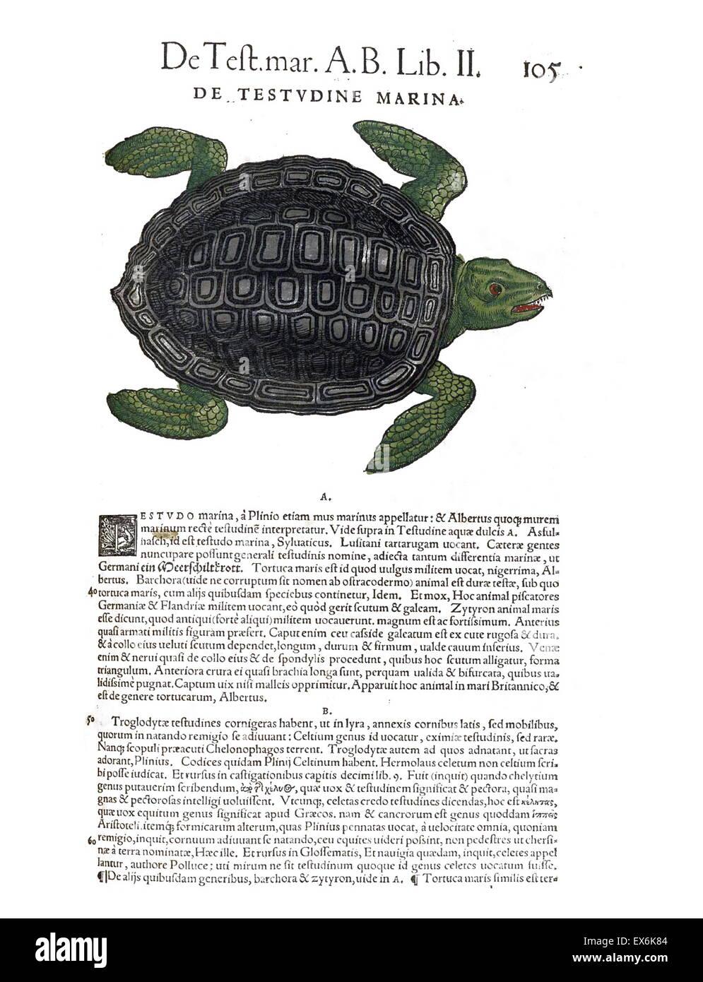 Außenillustration eine Meeresschildkröte aus \' Medici Tigurini ...