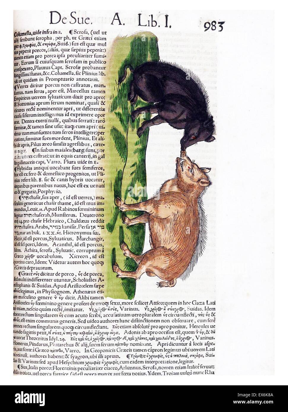 Abbildung der Wildschweine, aus \' Medici Tigurini Historiae ...