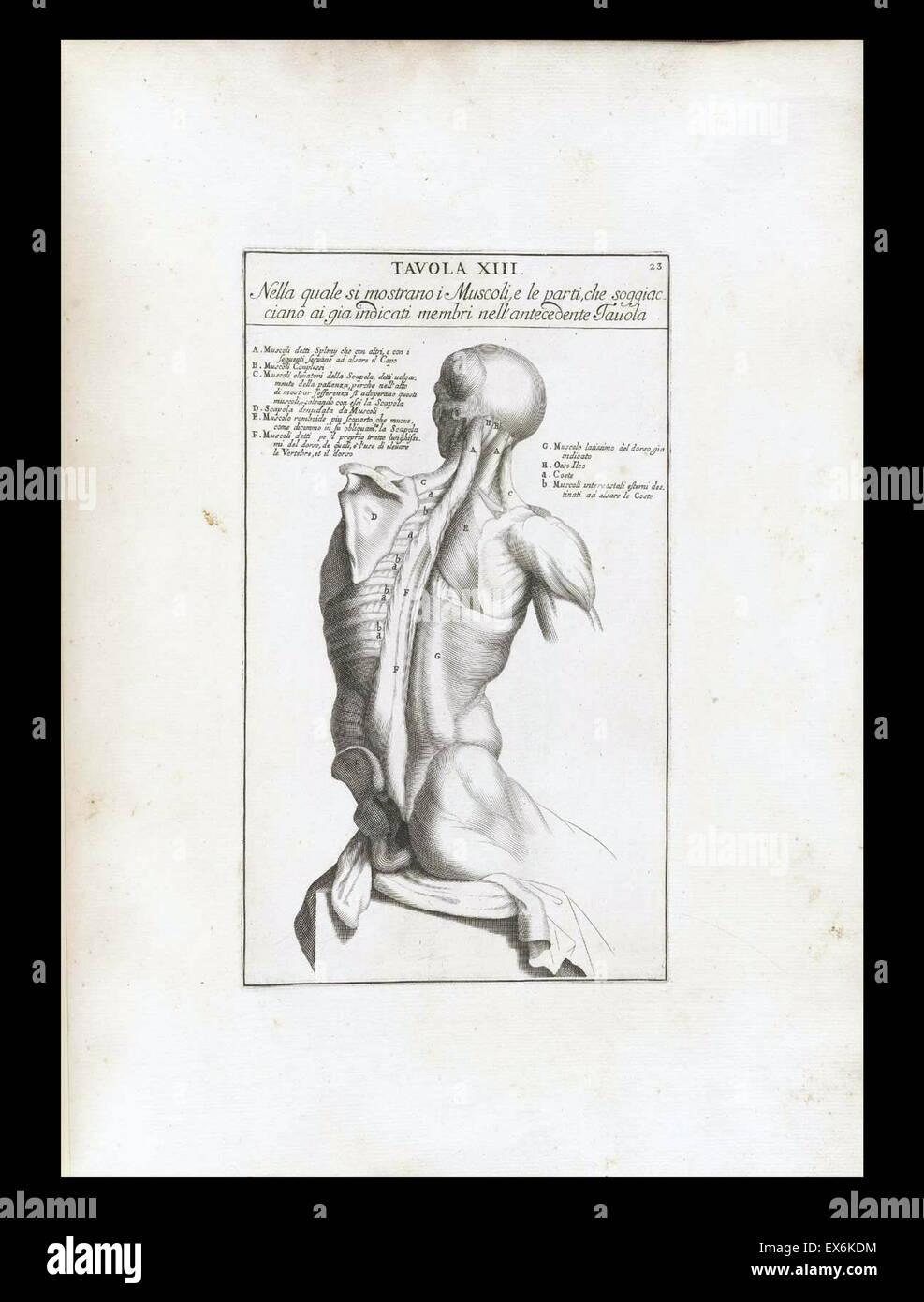 Großartig Anatomie Studie Werkzeuge Galerie - Anatomie Von ...