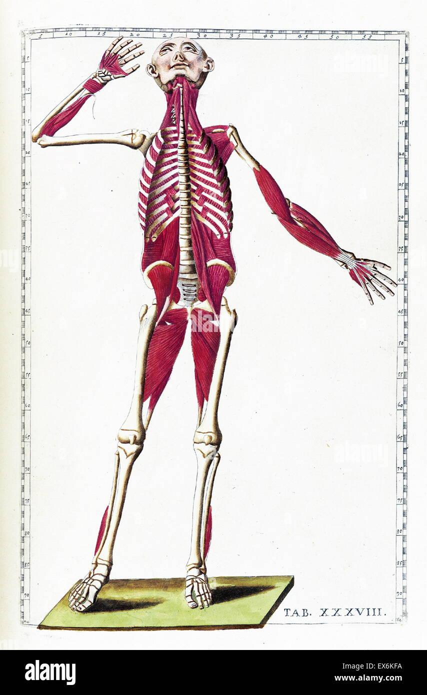 Fein Grundlagen Der Menschlichen Anatomie Und Physiologie Neunte ...