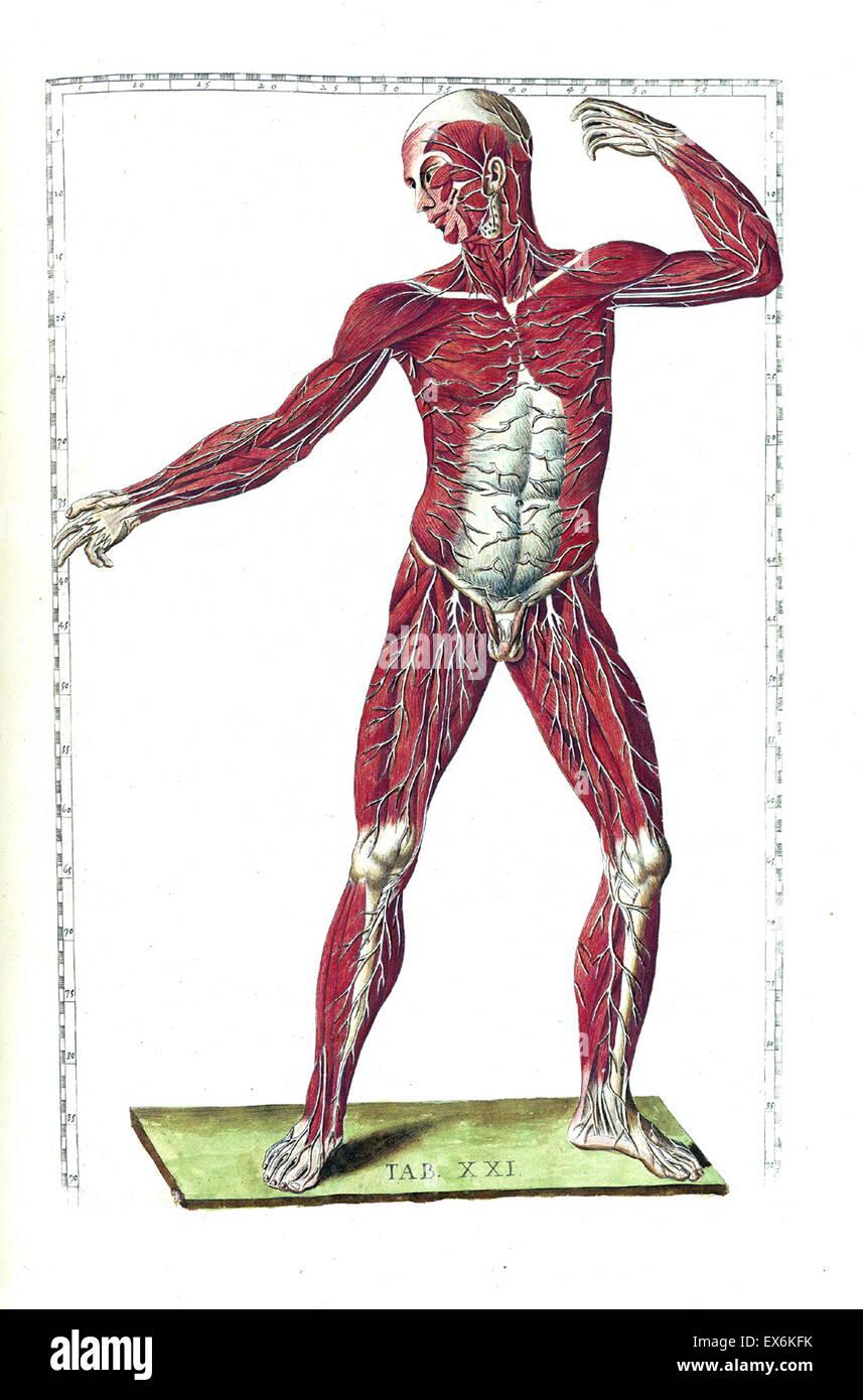Groß Anatomie Des Menschen Karrieren Bilder - Anatomie Ideen ...