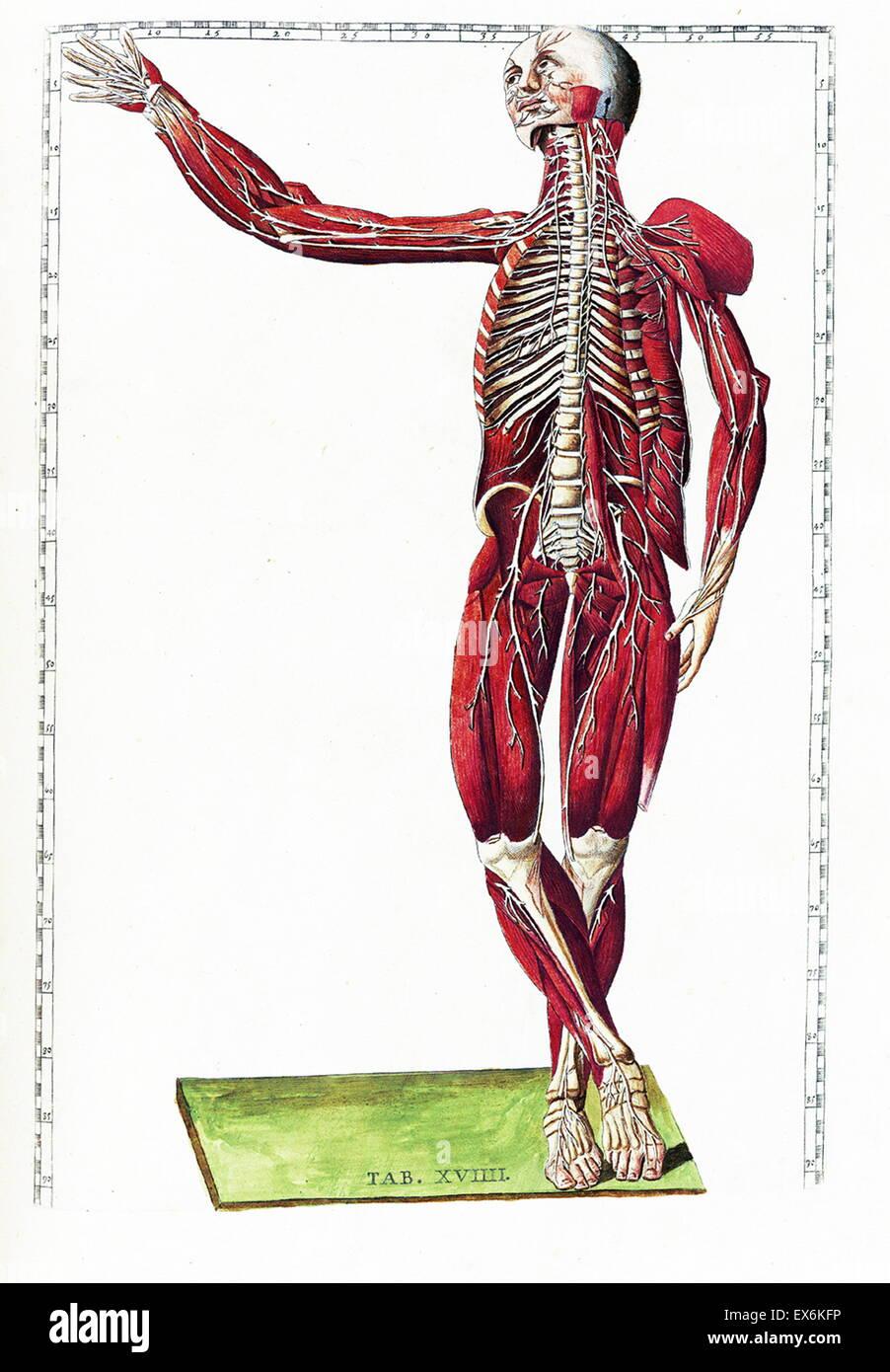 Nett Anatomie Des Menschen Karrieren Ideen - Anatomie Von ...