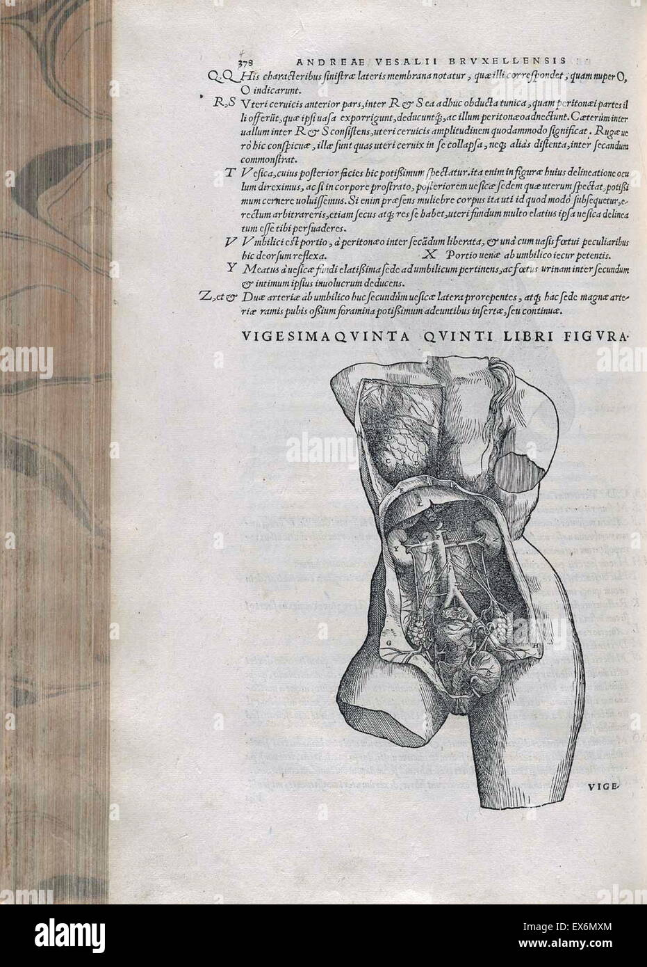Nett Weibliche Beckenanatomie Galerie - Menschliche Anatomie Bilder ...