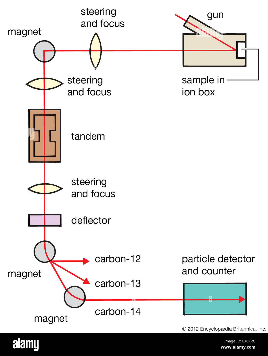 Warum wird Carbon 14 in der Radiokarbondatierung verwendet
