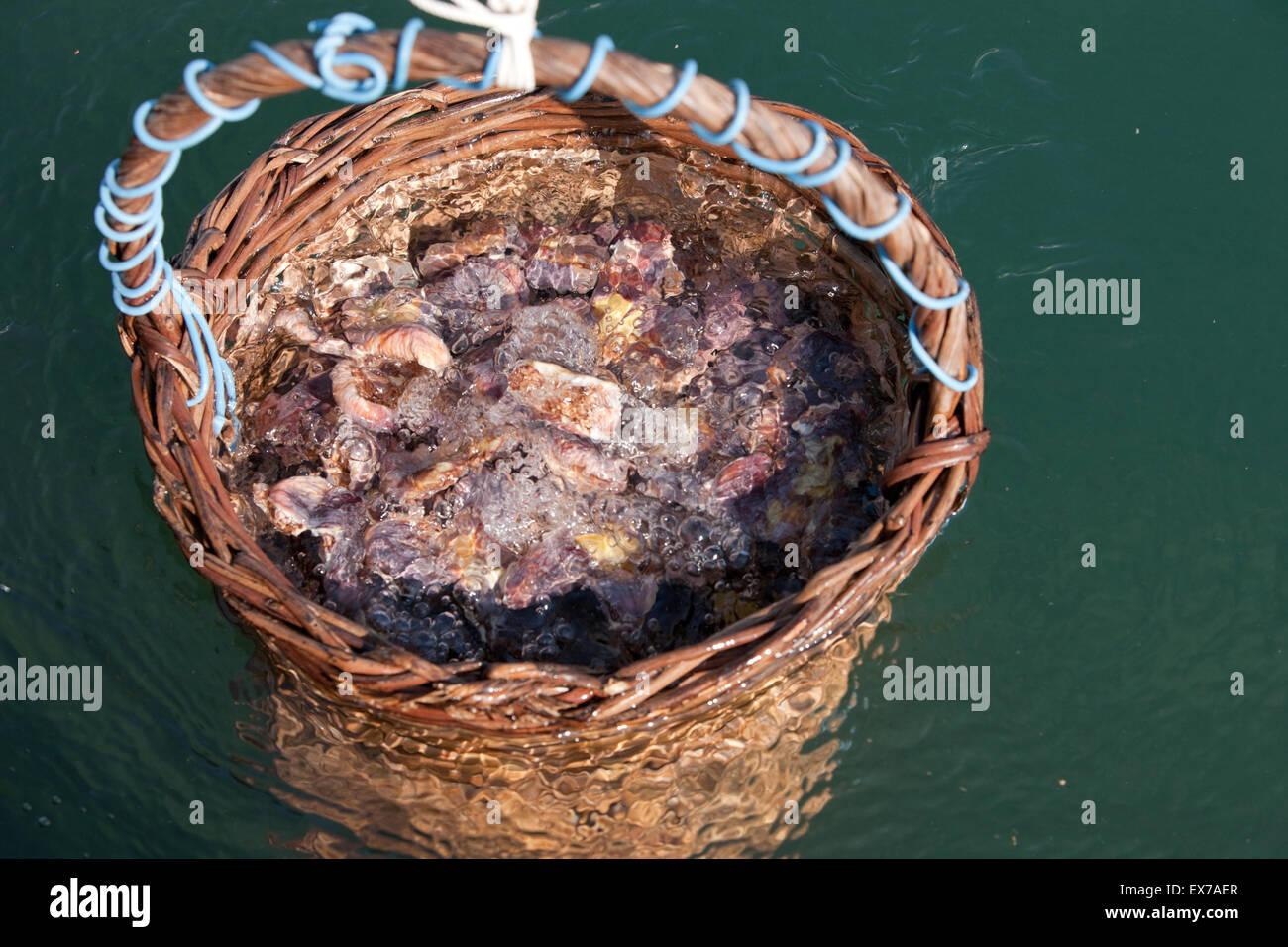 fig drying stockfotos fig drying bilder alamy. Black Bedroom Furniture Sets. Home Design Ideas