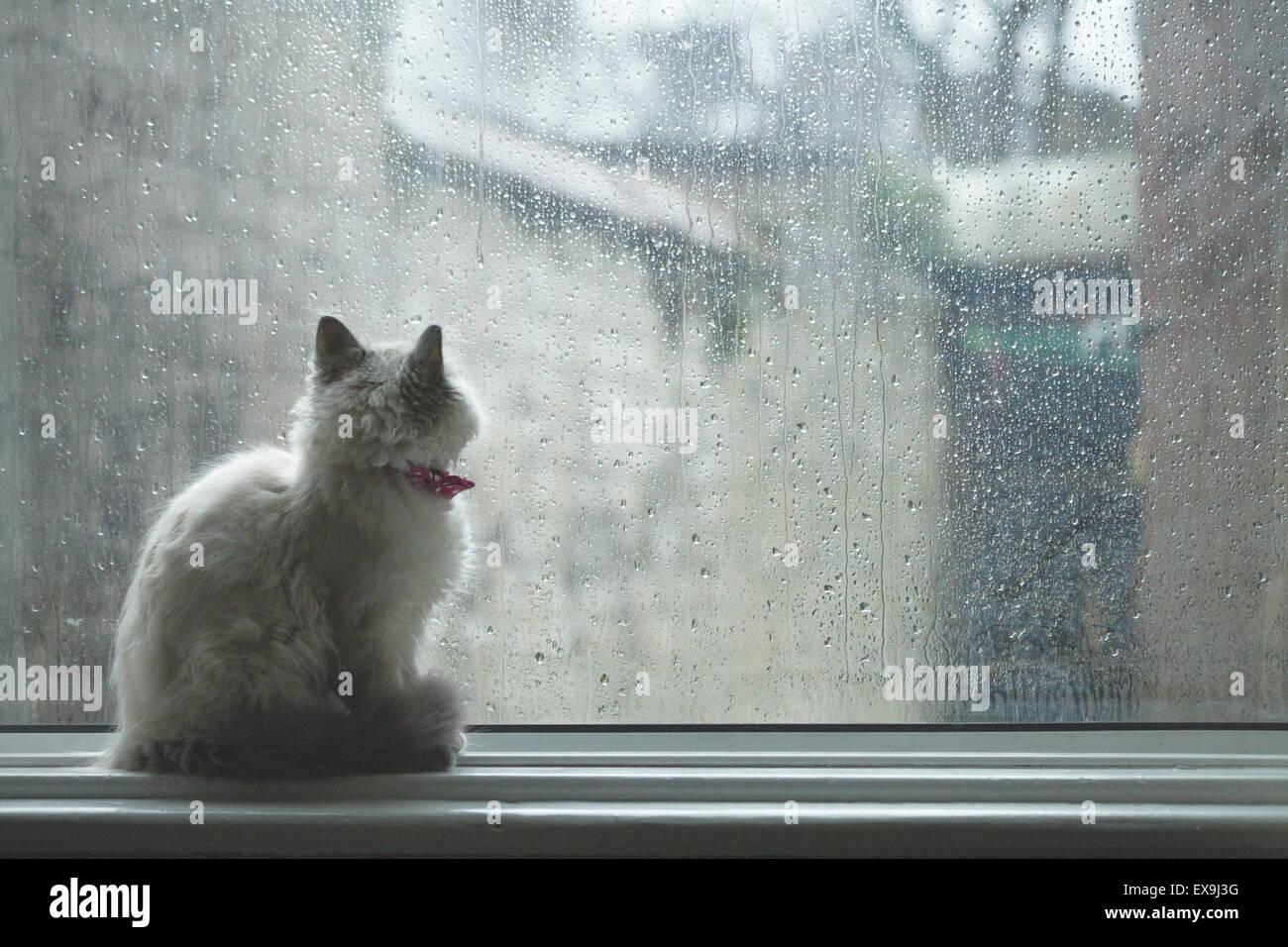 Katze sitzt auf einem Fensterbrett, nach draußen durch das Glas regen bedeckt mit Konnotationen von Einsamkeit, Stockbild