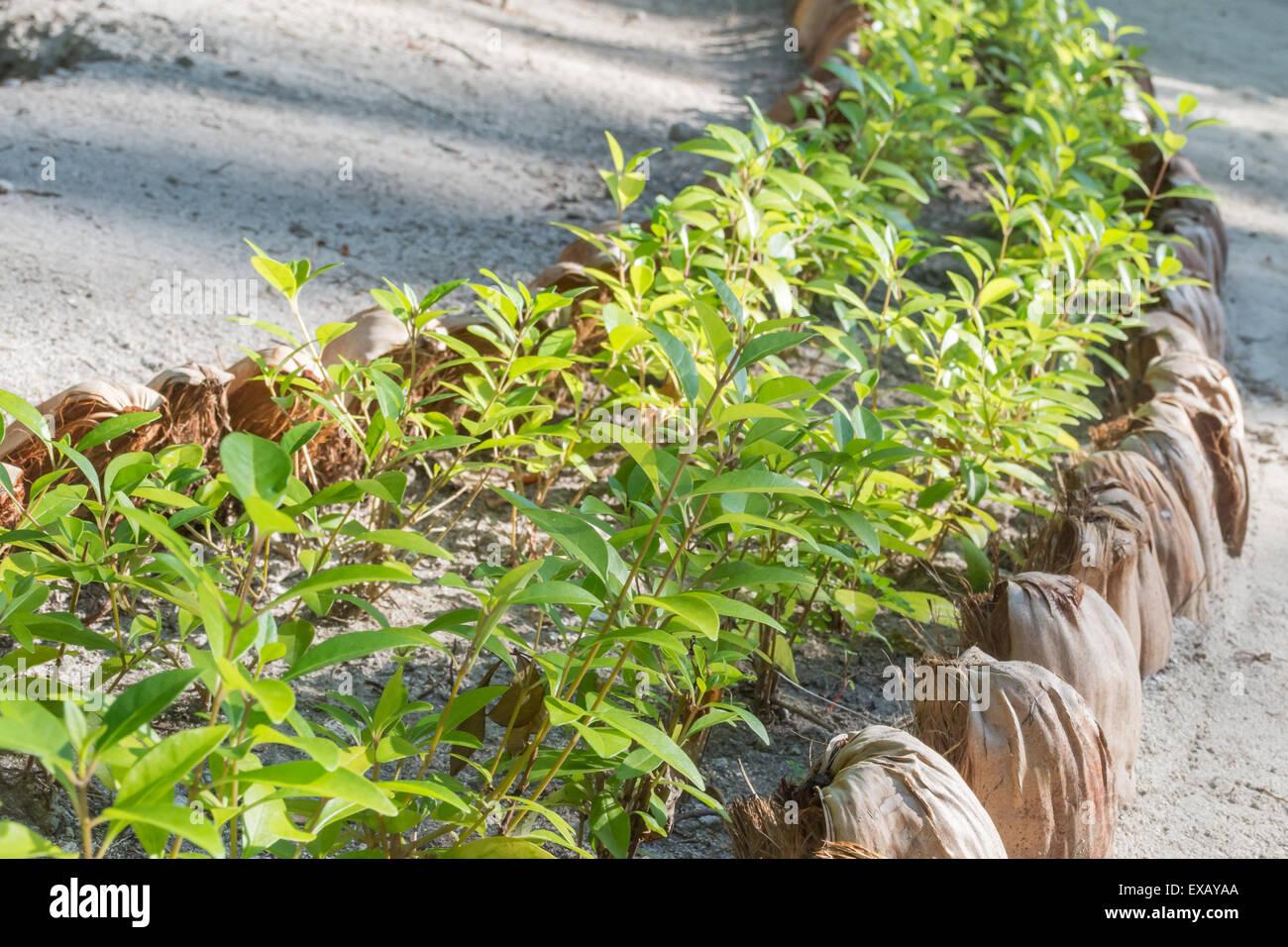 Covers Green Stockfotos & Covers Green Bilder - Seite 33 - Alamy