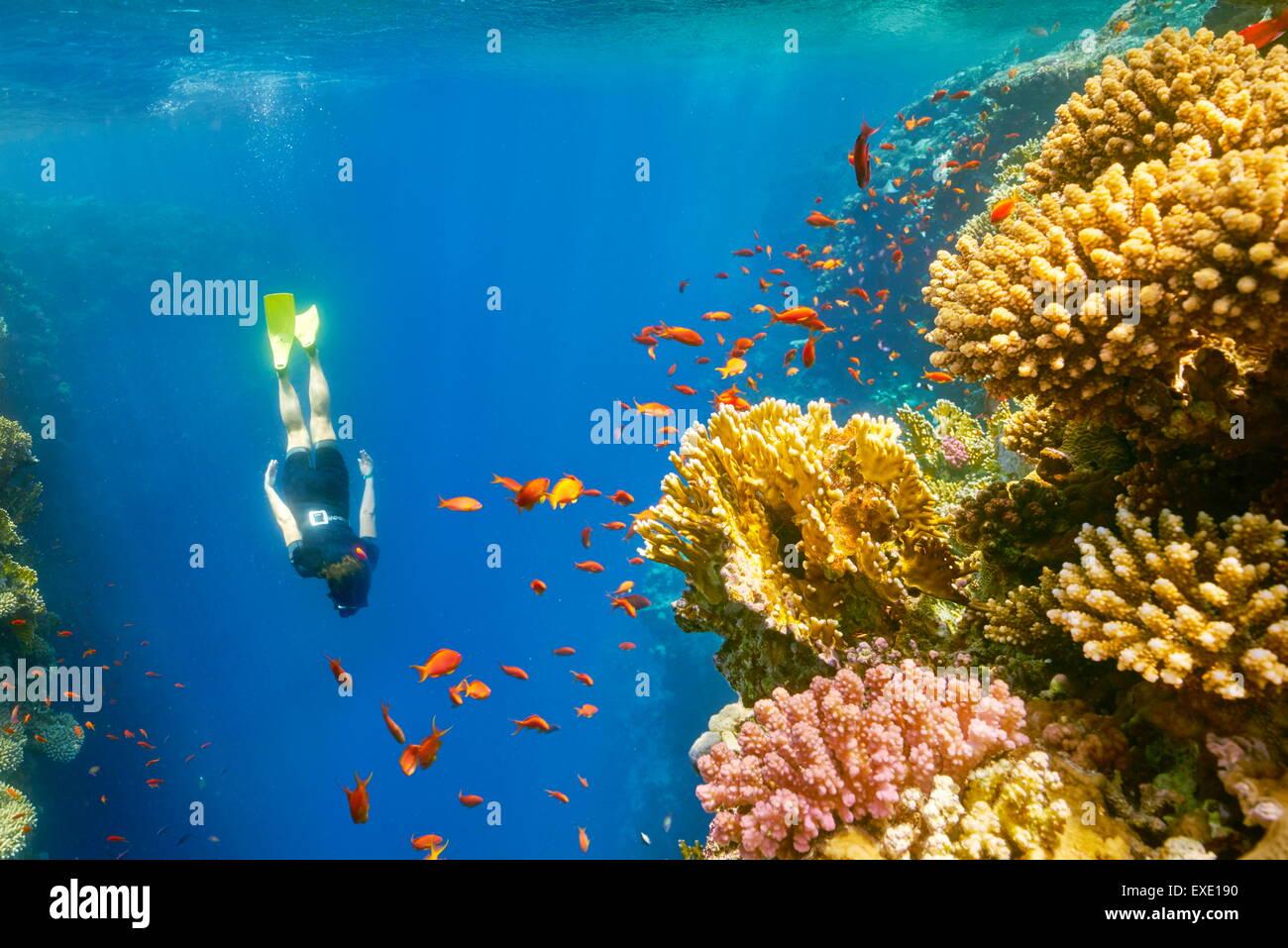 Rotes Meer, Ägypten - Frau Schnorcheln Unterwasser, Korallenriff, Blue Hole in Dahab Stockbild
