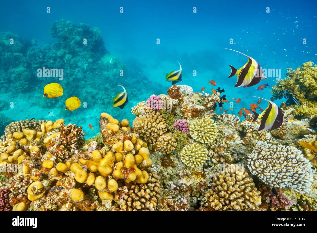 Rotes Meer - Unterwasser Tauchen Bild von Fisch über das Korallenriff, Marsa Alam, Ägypten Stockbild