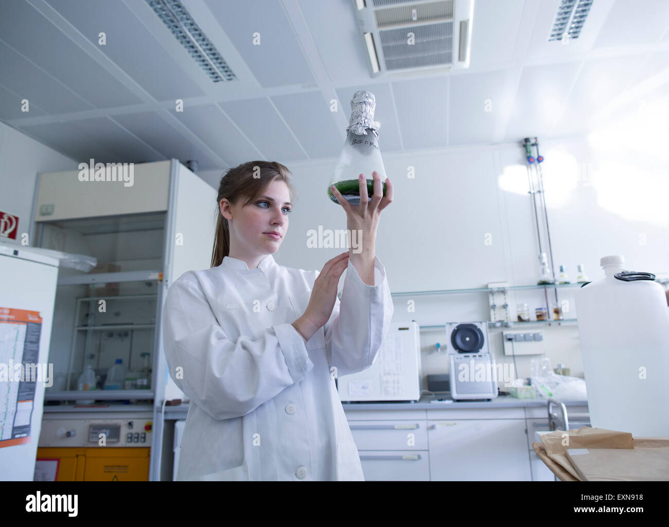 Junge Naturforscher beobachten aufbereitet in einem Erlenmeyerkolben Stockbild