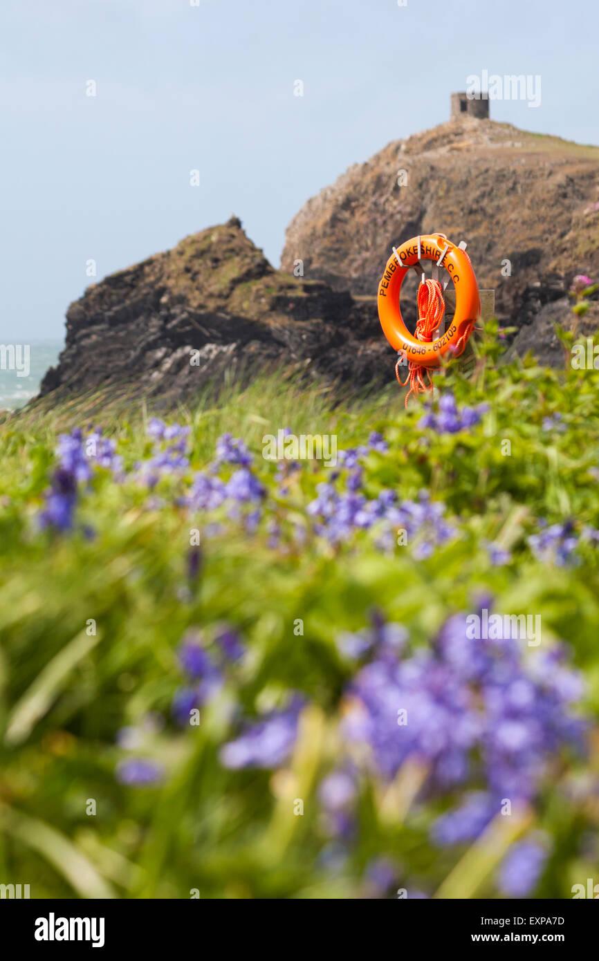 Glockenblumen, Klippen und Turm im Abereiddy, Pembrokeshire Coast National Park, Wales im Mai Stockbild