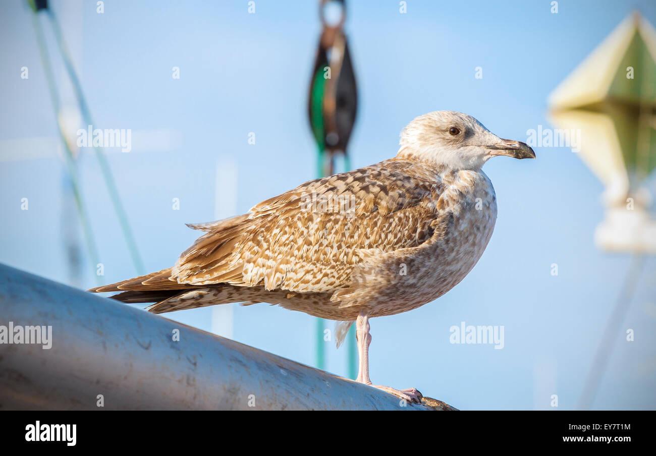 Möwe stehend auf einem Mast in den Hafen. Stockbild