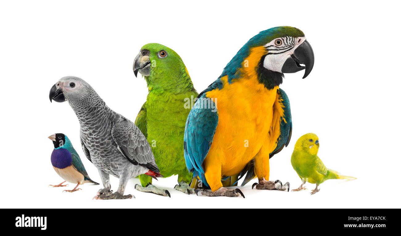 Macaw Group Stockfotos & Macaw Group Bilder - Seite 3 - Alamy