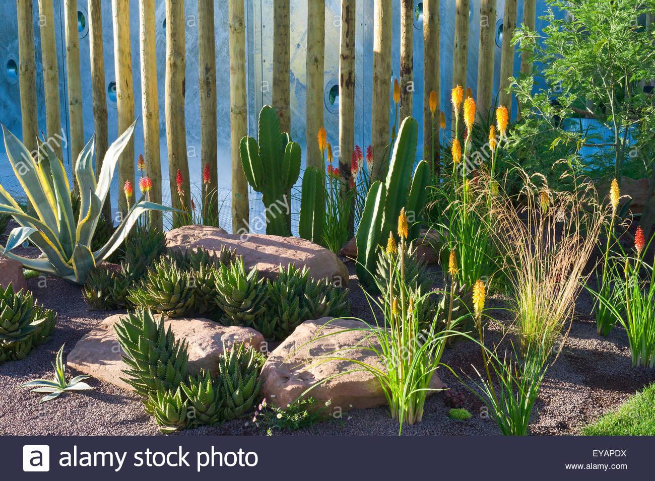 Zeitgenössische Stein und Kies Garten mit Pflanzen Sukkulenten