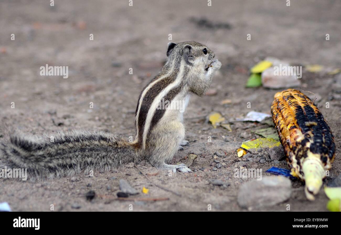 Squirrel On Wire Stockfotos & Squirrel On Wire Bilder - Alamy