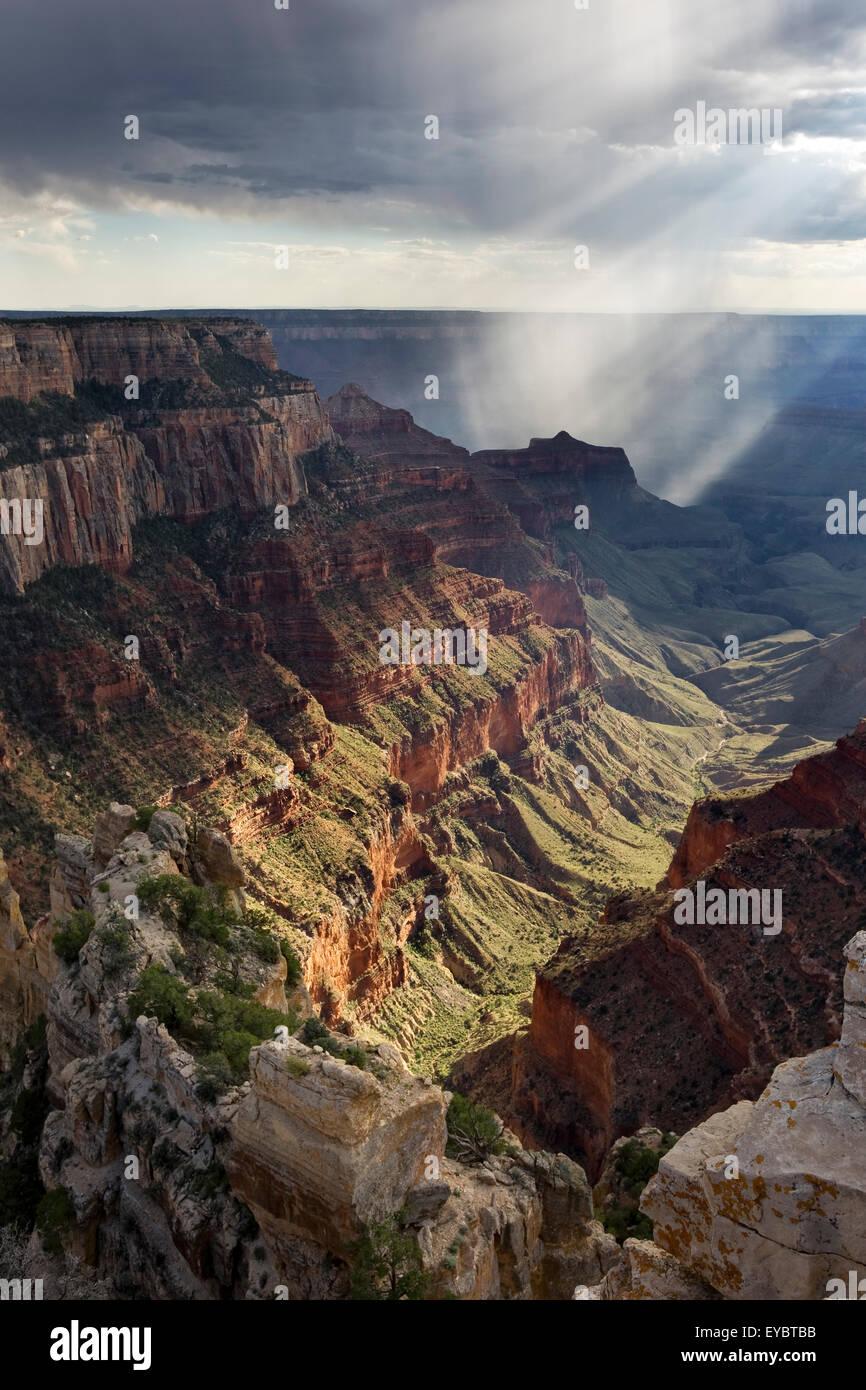 Nationalpark Grand Canyon North Rim, Arizona Stockbild