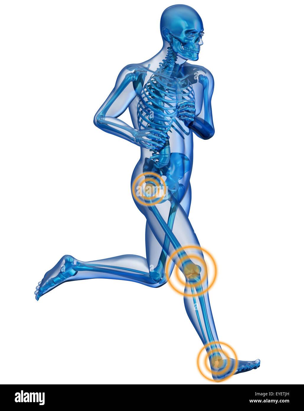 Großzügig Menschliches Hüftgelenk Bild Ideen - Menschliche Anatomie ...