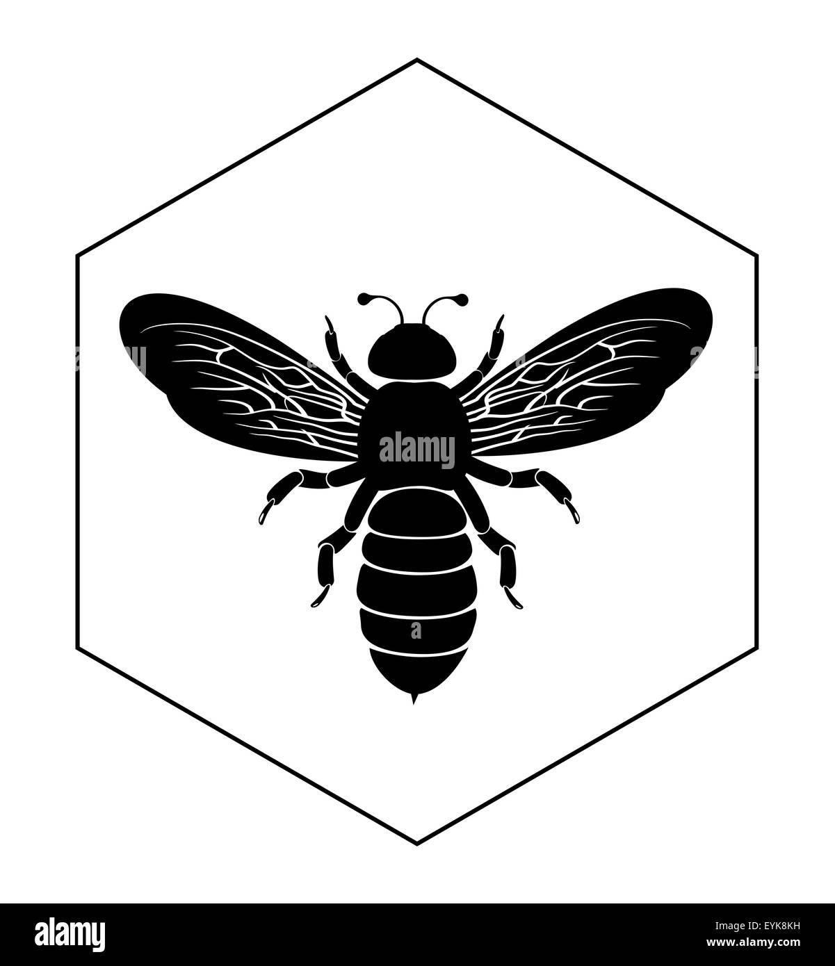 Schön Die Anatomie Einer Biene Ideen - Anatomie Ideen - finotti.info