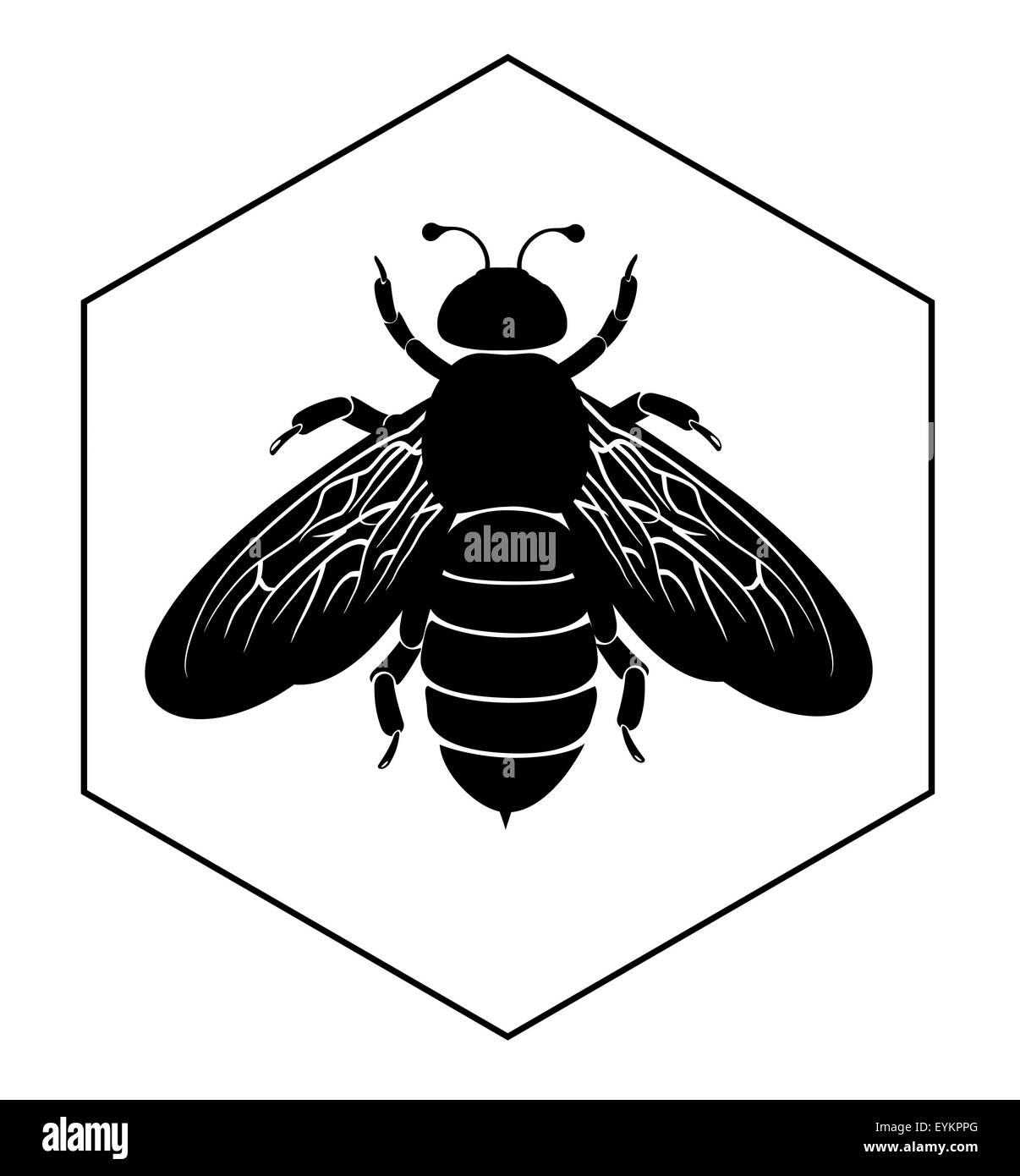 Charmant Die Anatomie Einer Biene Zeitgenössisch - Anatomie Von ...