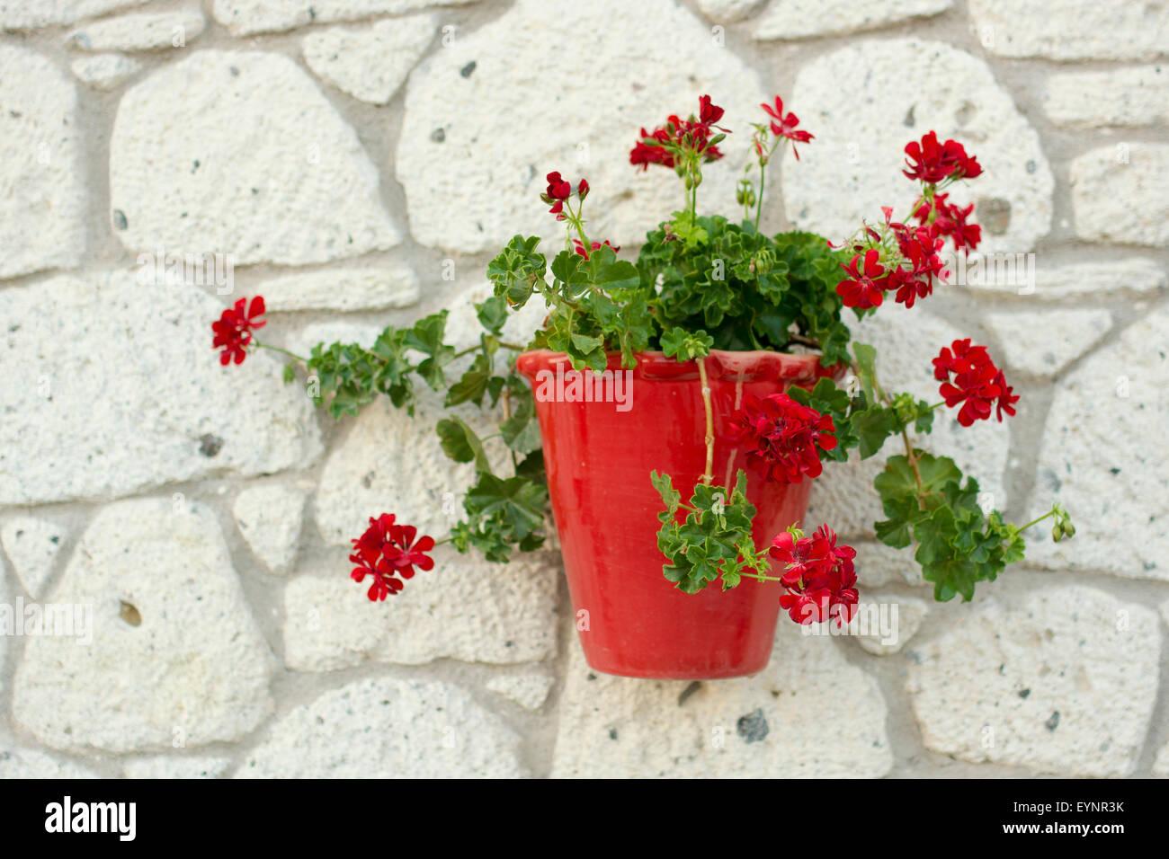 Blumentopf An Der Wand Stockfoto Bild 85916311 Alamy