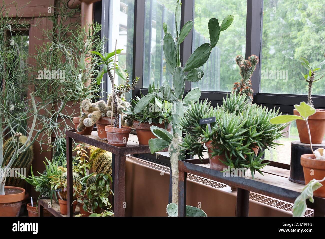 Regale Aus Kakteen Und Sukkulenten In Einem Gewachshaus Stockfoto