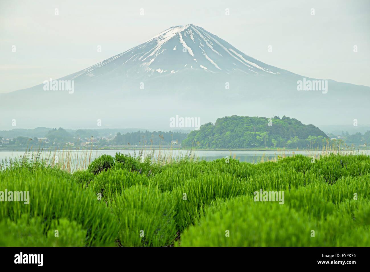 Mt. Fuji Morgen bei Kawaguchi, Japan Stockbild