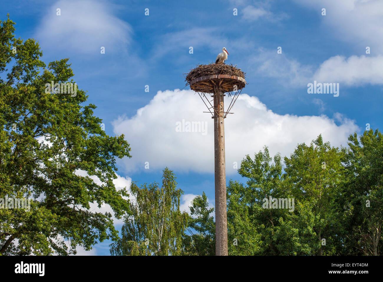 Europa, Deutschland, Brandenburg, Spreewald (Spreewald), Silberdistel, Storch Stockbild