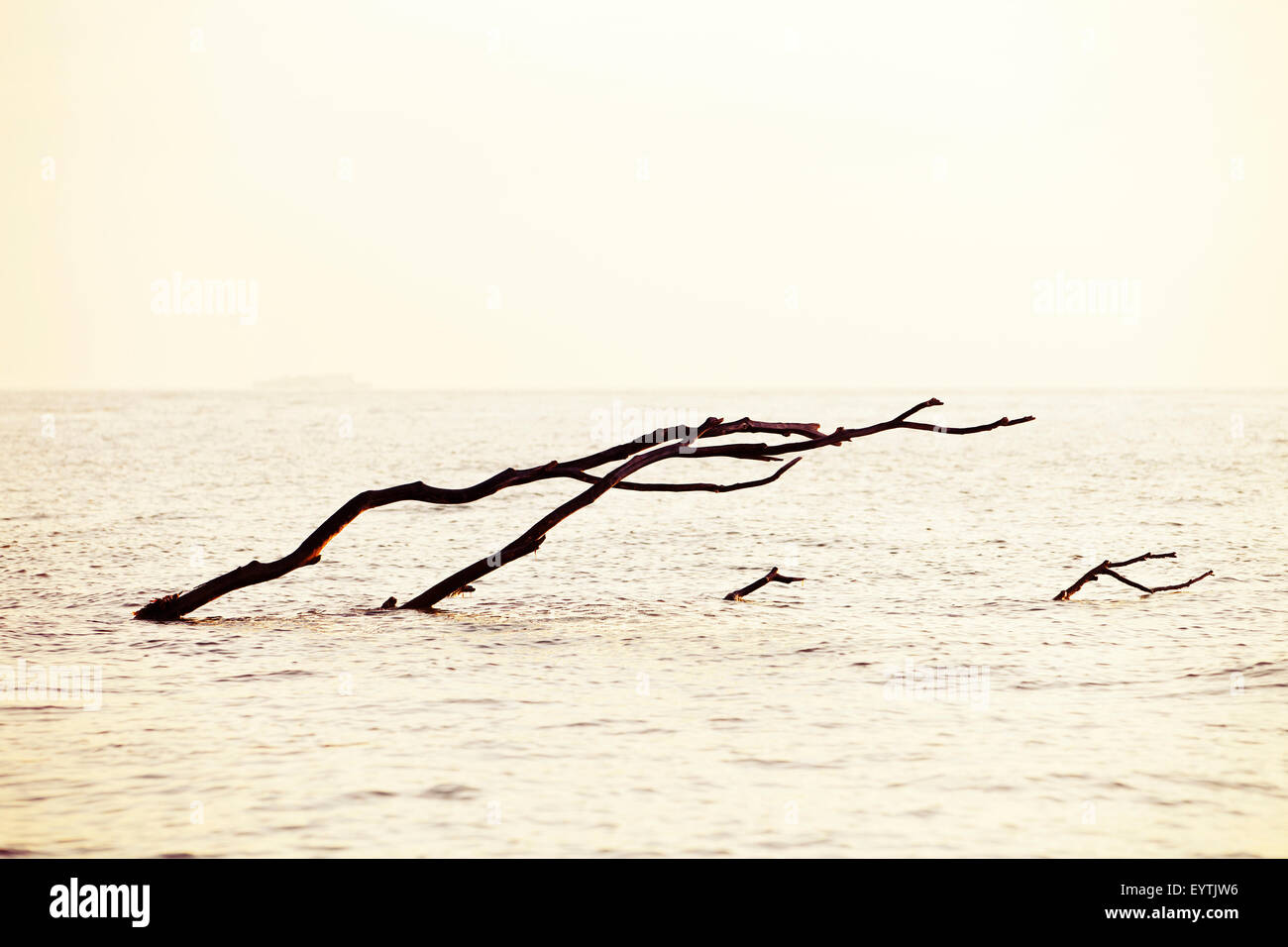 Baum am Meer liegend, Passagierschiff am Horizont Stockbild