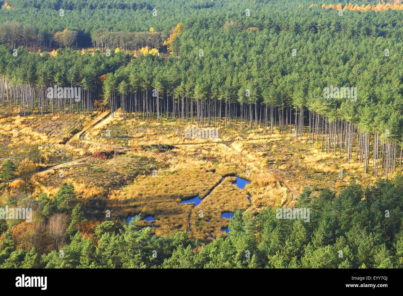 Luftbild zur Abholzung von Wald, Wald Transformation und Entwicklung von Heather mit Pool, Belgien Stockbild