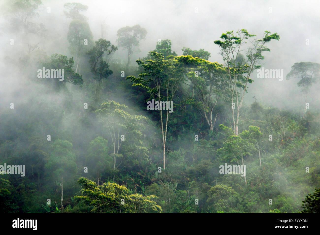 tropischer Regenwald im Nebel, Madagaskar, Ranomafana Nationalpark Stockbild