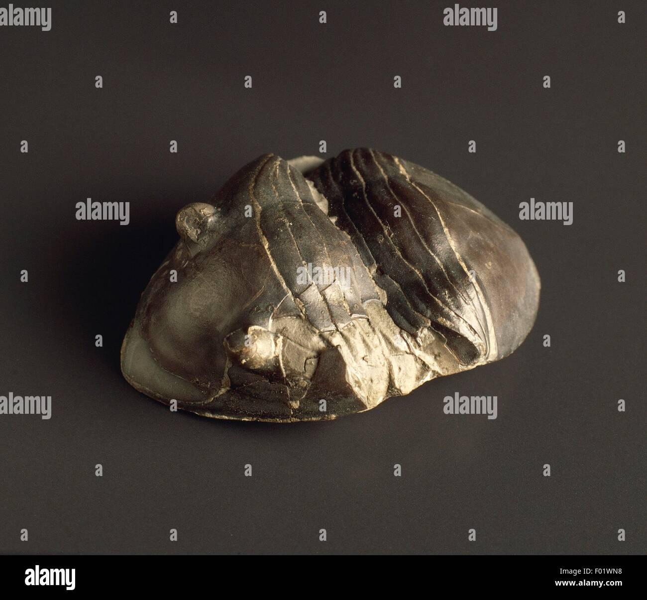 Fossilien - Protostomia - Gliederfüsser - Trilobiten - Isotelus Gigas - Ordovizium. Stockbild