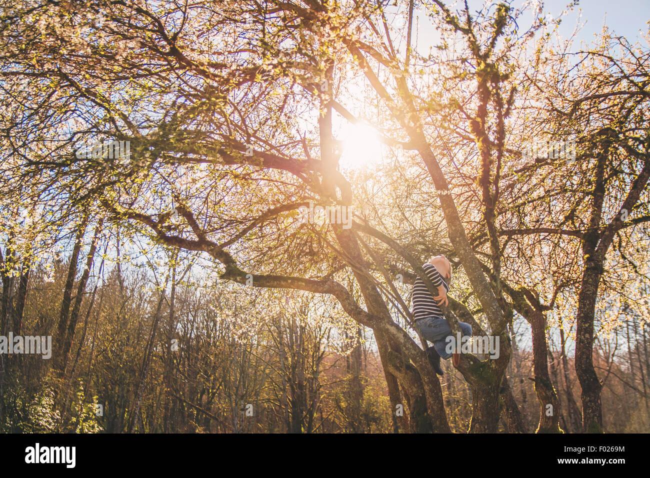 Junge, die einen Baum klettern Stockbild