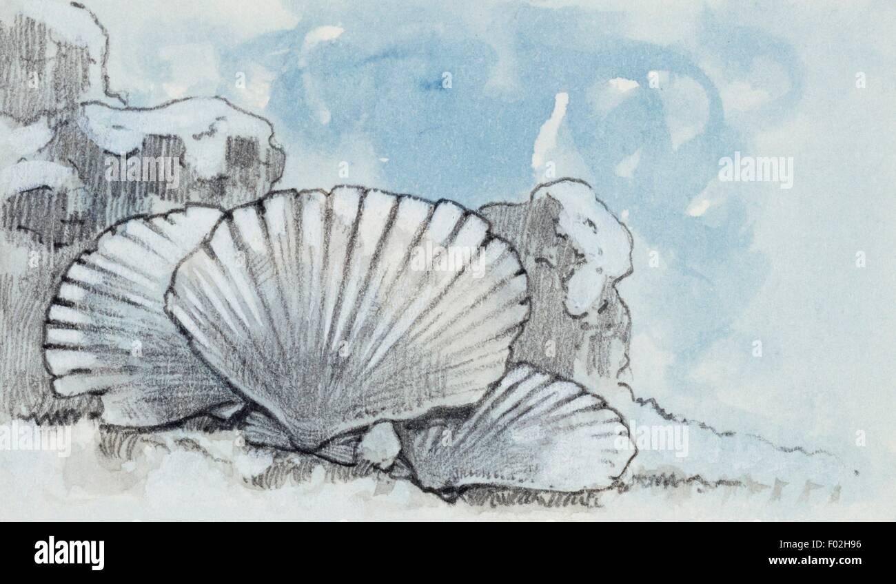 Rekonstruktion der Umgebung, die eine Pecten Brekzie, Bivalvia Gattung schaffen könnte. Zeichnung. Stockbild